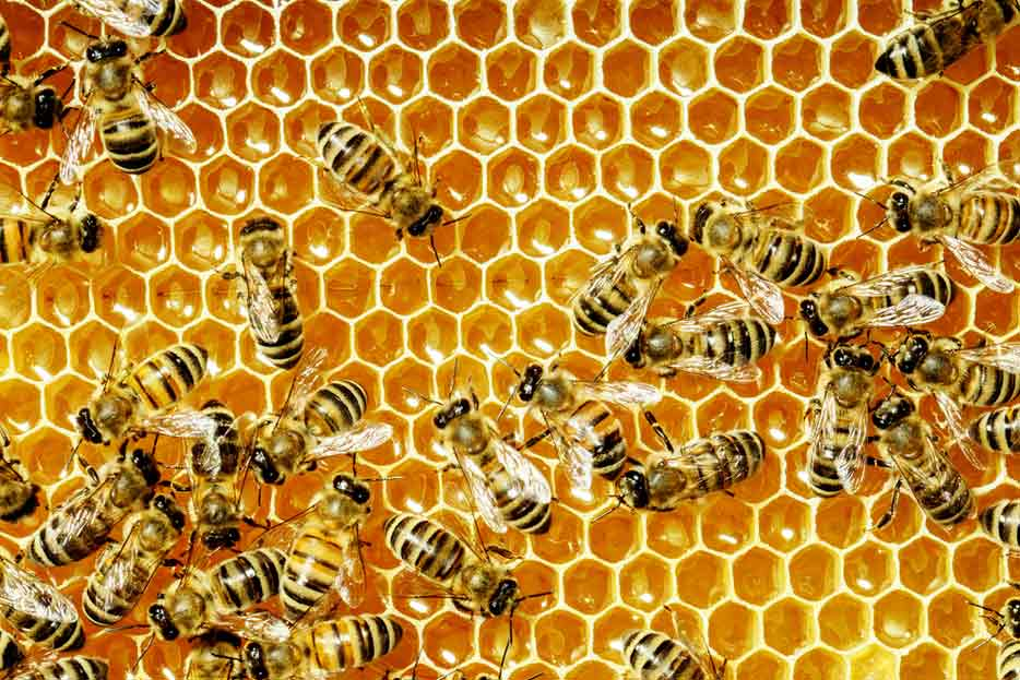 Scientists Microchip Bees
