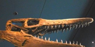 mosasaur found in antarctica